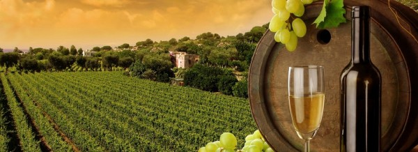 vino-blanco (2)